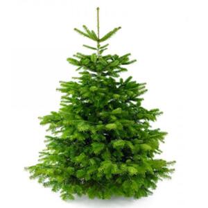 Kerstboom bestellen nordmannn