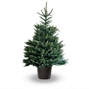 Kerstboom bestellen bij for Albero di natale vero