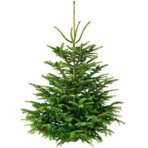 kerstboom bestellen