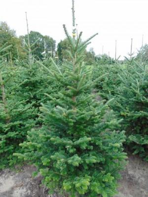 kerstboom online bestellen