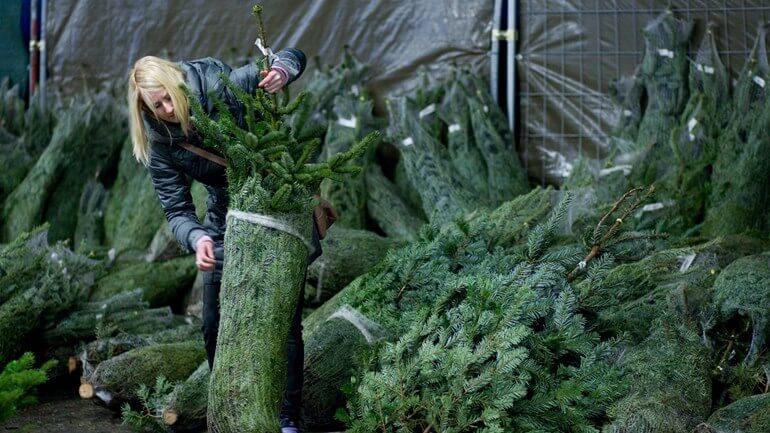 ECHTE kerstboom thuis bezorgen