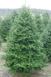 een kerstboom met korting bestellen